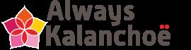 Always Kalanchoe | waseigenes.com