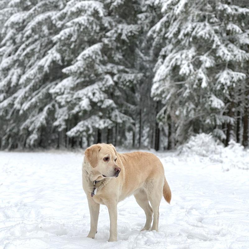 Das war mein Januar 2021 | Monatsrückblick | waseigenes.com | Mollie im Schnee