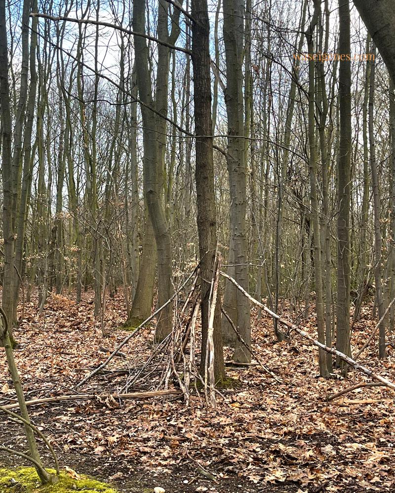 Phänomen der Gegenwart: In den Wäldern entstehen kleine Siedlungen, Ast-Häuser, Tipis,... denn die Welt geht spazieren und die Kinder müssen gelüftet werden. | waseigenes.com