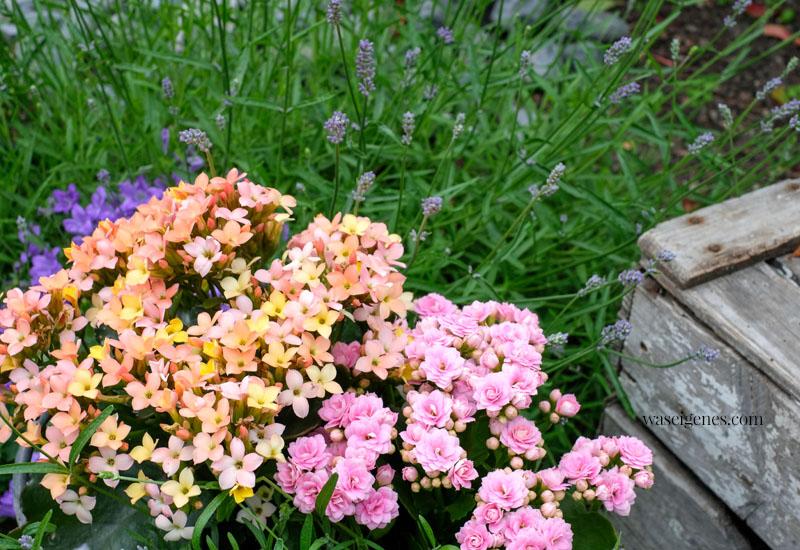12 von 12 im Juni 2021 | Mein Tag in Bildern | waseigenes.com | Blumen