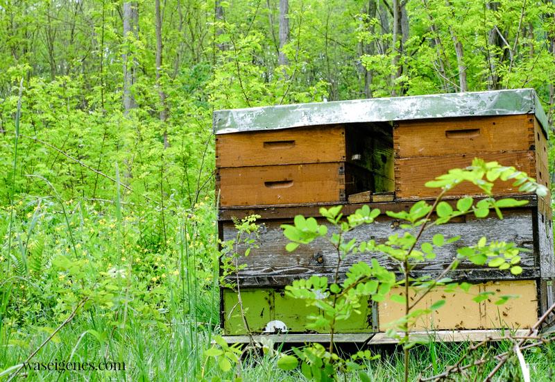 REWE Bio Honig - Bienenvolk in Buckow (Brandenburg} | waseigenes.com