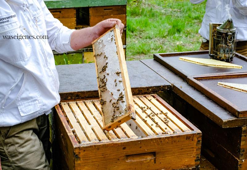 Bienenvolk in Buckow (Brandenburg) | waseigenes.com