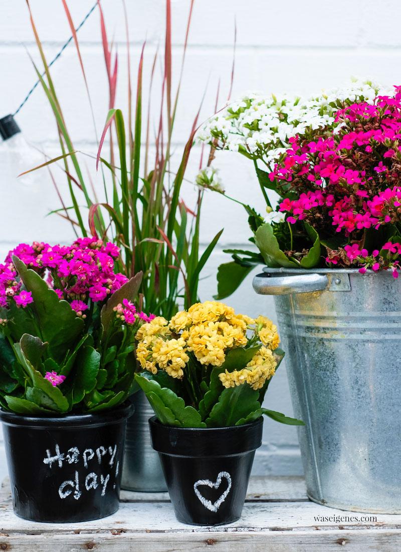 DIY bemalte Terrakotta Töpfe mit Tafelfarbe und Kreide   Kalanchoe   Unser Garten   Freude, Sommer, happy day, Glück    waseigenes.com